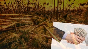 DeforestationPay-alt